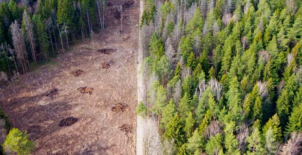 Губернатор Подмосковья пригласил девелоперов на высадку леса